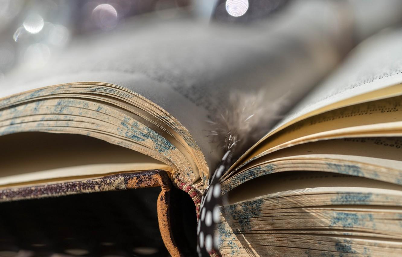 Фото обои макро, фон, книга