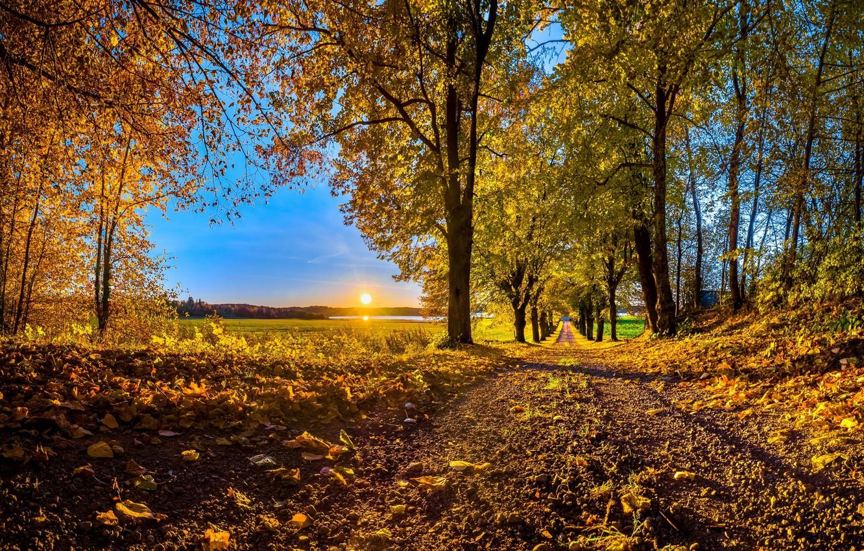 Фото обои дорога, осень, листья, деревья, закат, Солнце