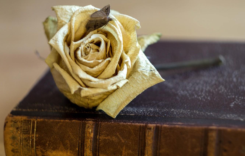 Фото обои цветок, роза, книга