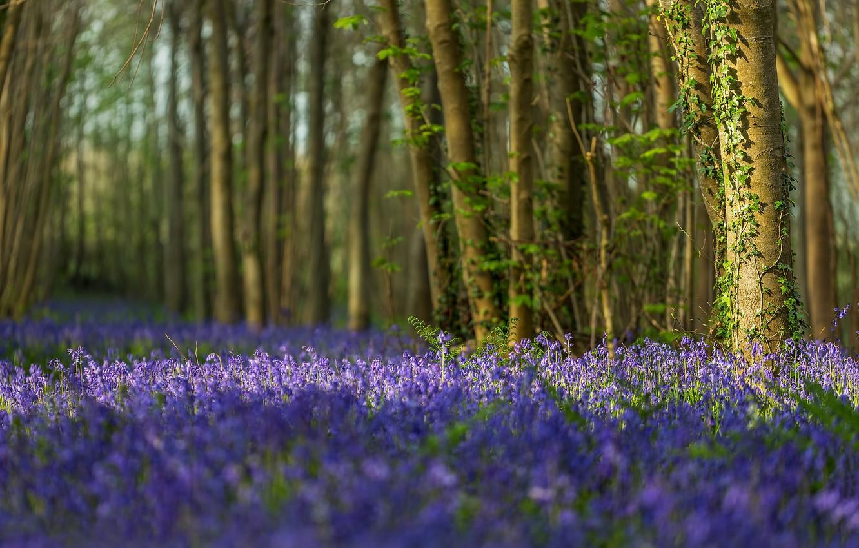 Цветение в темном углу сада фото голыми