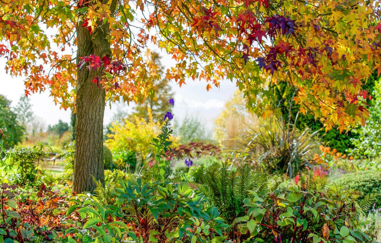 Фото обои осень, цветы, парк, дерево, Англия, England, Essex, Эссекс, RHS Garden Hyde Hall, Реттендон, Rettendon