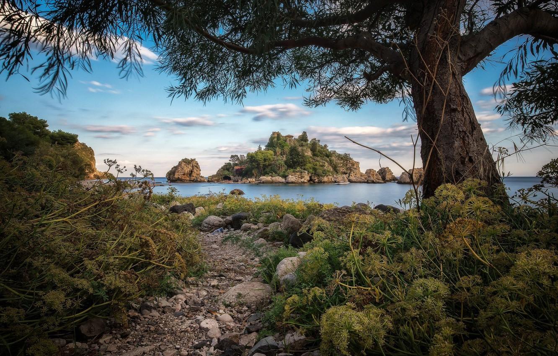 Фото обои озеро, дерево, остров