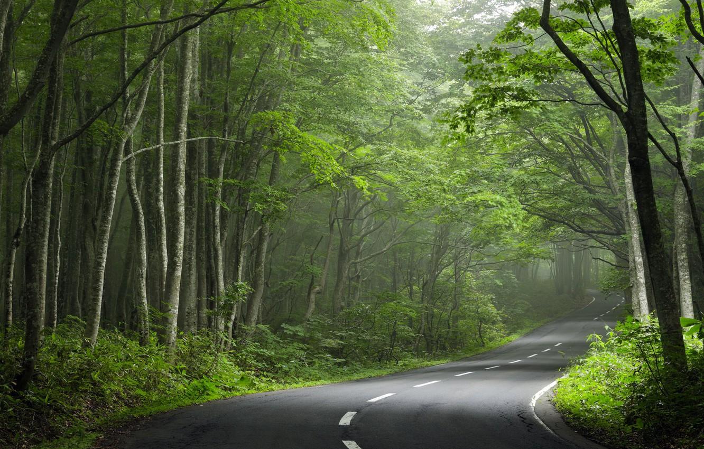 Фото обои дорога, лес, поворот