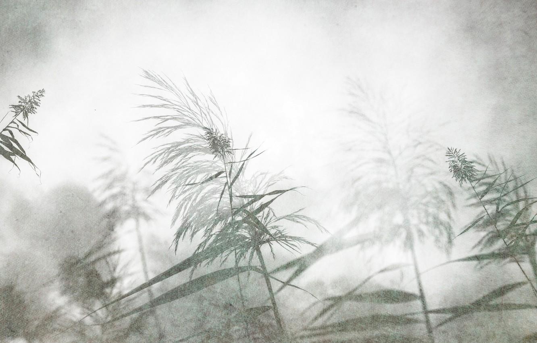 Фото обои трава, цветы, природа, фон