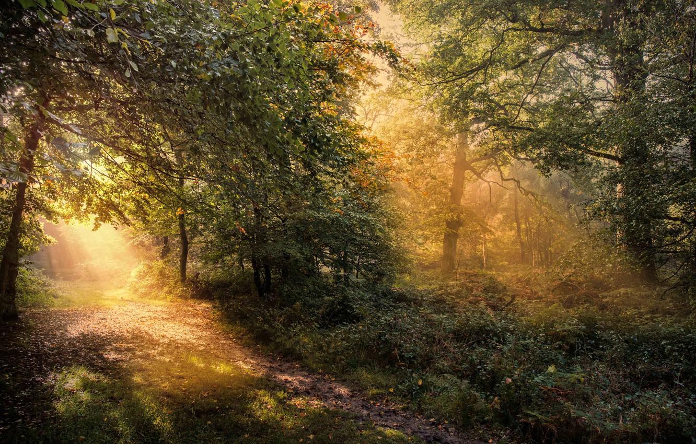 Фото обои осень, лес, деревья, рассвет, Англия, тропа, утро