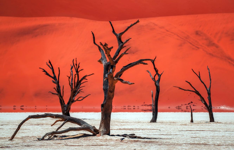 Фото обои деревья, природа, пустыня