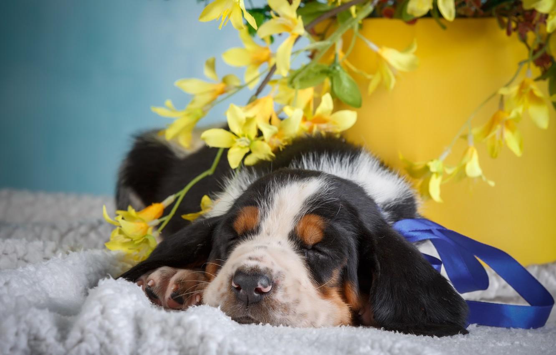 Фото обои цветы, фон, животное, щенок