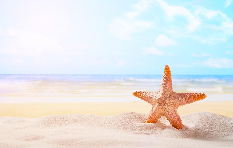 Фото обои песок, море, пляж, звезда, summer, beach, sea, sand, starfish