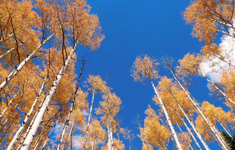 Фото обои осень, небо, деревья