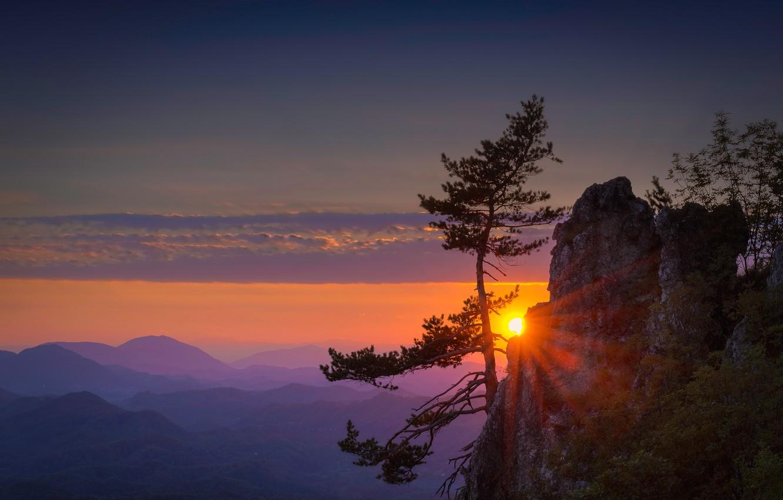 Фото обои небо, закат, горы, скала, дерево, сосна