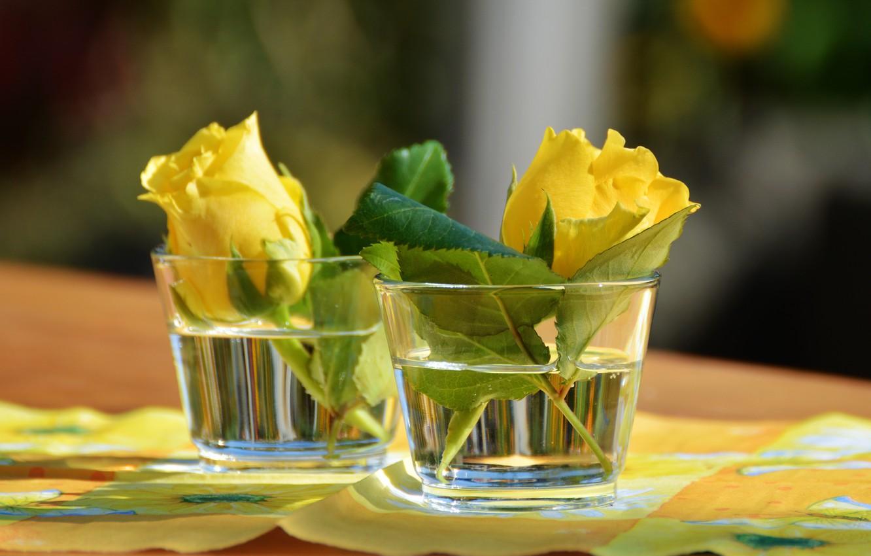Фото обои цветы, розы, стаканы, салфетка