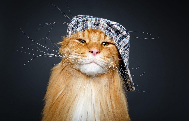 Фото обои кот, усы, взгляд, морда, темный фон, фон, портрет, рыжий, кепка, фотосессия, котяра, котэ, крутой, мейн-кун, ...