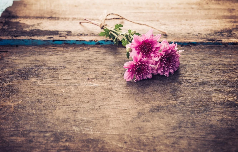 Фото обои цветы, букет, Хризантемы
