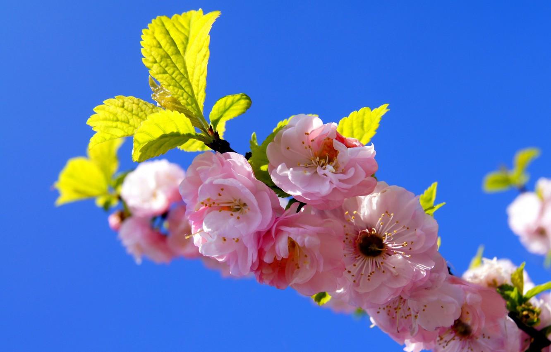 Фото обои небо, ветка, весна, сад, сакура, цветение