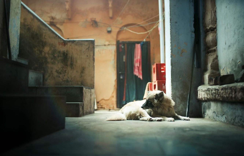 Фото обои дом, комната, собака