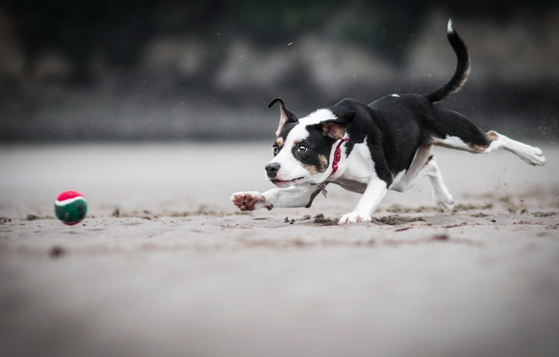 Фото обои игра, мяч, собака