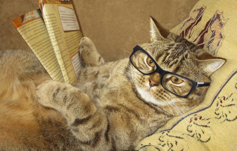 Картинки мудрый кот