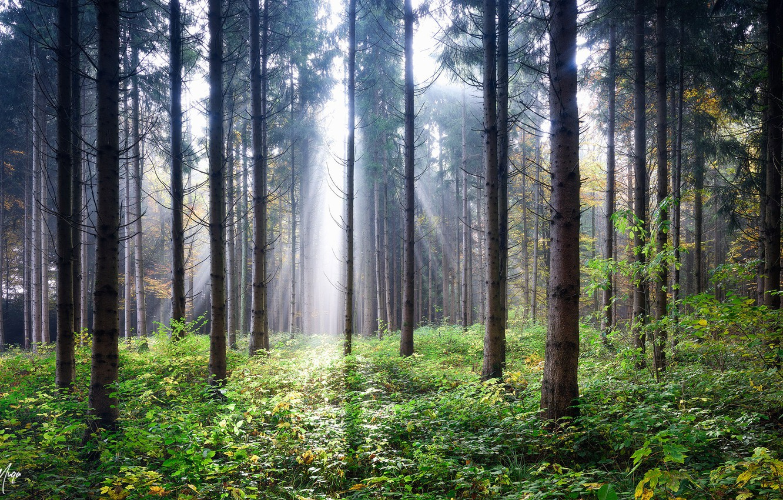горячая качественные фотографии российского леса штатив лучше повесить