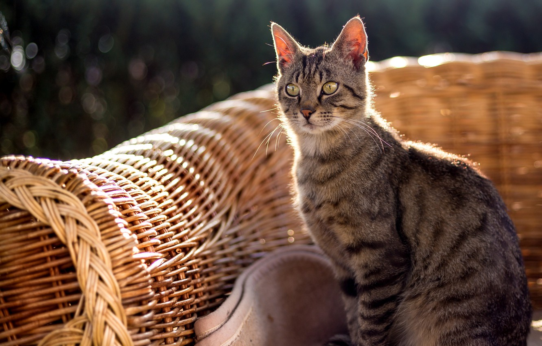 Обои животные, лето, кот, кошки, природа, дача, рыжий кот, стёпка ... | 850x1332