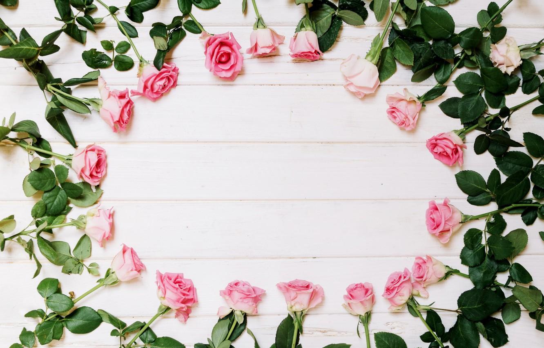 Фото обои цветы, розы, белый фон, бутоны