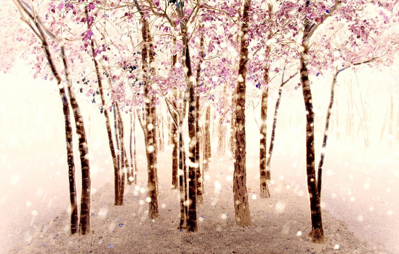 Фото обои деревья, природа, фон
