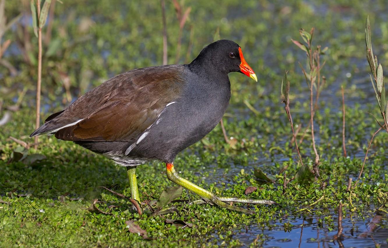 этот параметр птицы с красным клювом и лапами фото советский