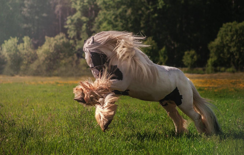Фото обои конь, луг, грива, резвится