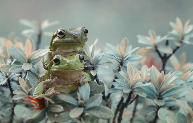 Картинки с милыми лягушками