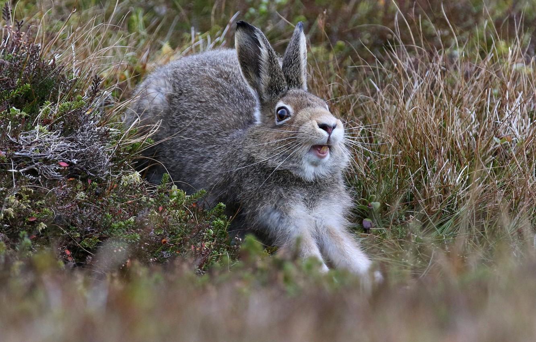 картинка зайца самая лучшая свое время поработала