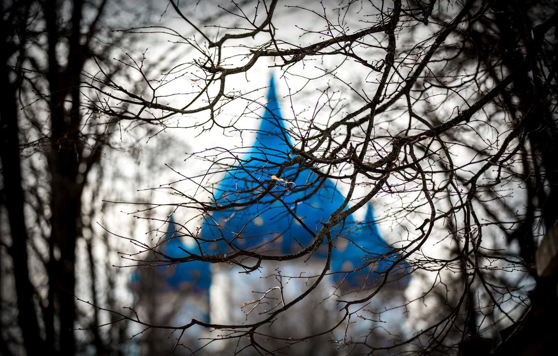 Фото обои ветки, дерево, храм, купола