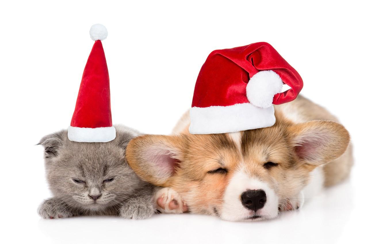 Ветеринарные картинки к новому году