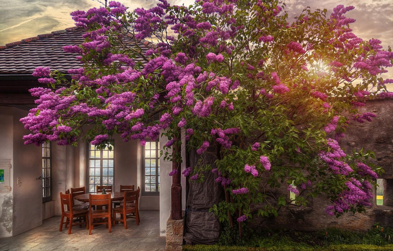 Фото обои солнце, дом, куст, стулья, сирень