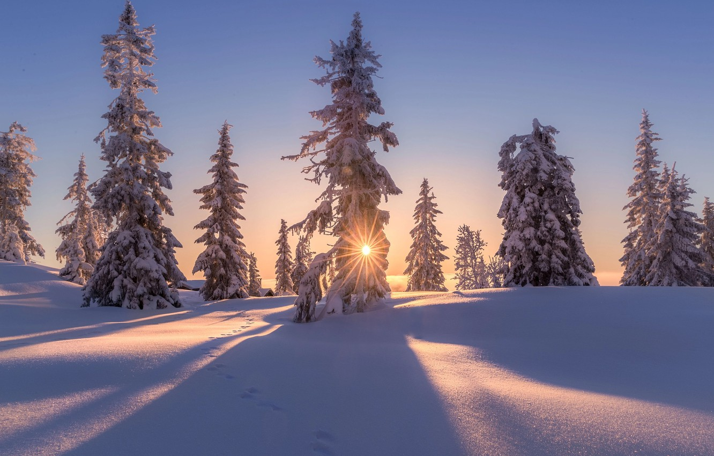 Фото обои зима, солнце, снег, деревья, природа, дома, вечер