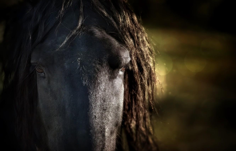 Фото обои макро, фон, конь