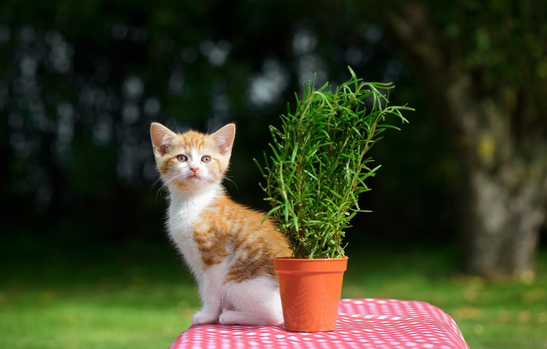 Фото обои цветок, стол, котёнок, боке