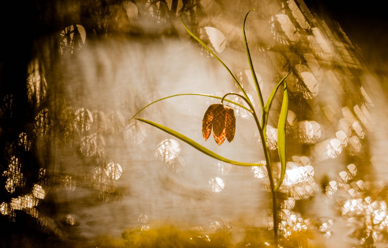 Фото обои цветок, свет, природа