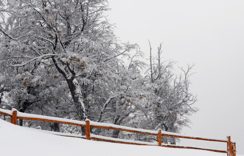 Фото обои снег, природа, дерево, забор