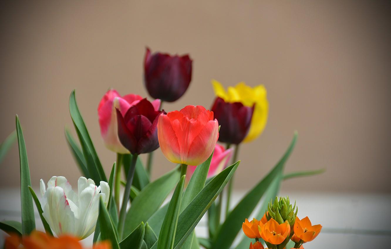 красивые комплекты фото на рабочий стол цветы тюльпаны сети много скал
