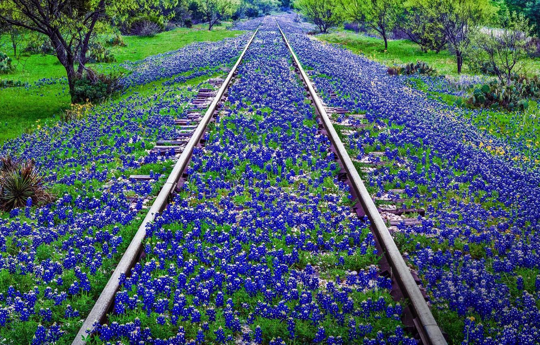 Фото обои цветы, рельсы, США, Техас, Ллано