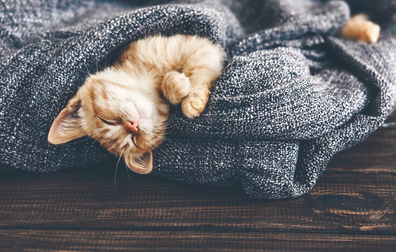 Фото обои кот, рыжий, спит, лежит, котёнок