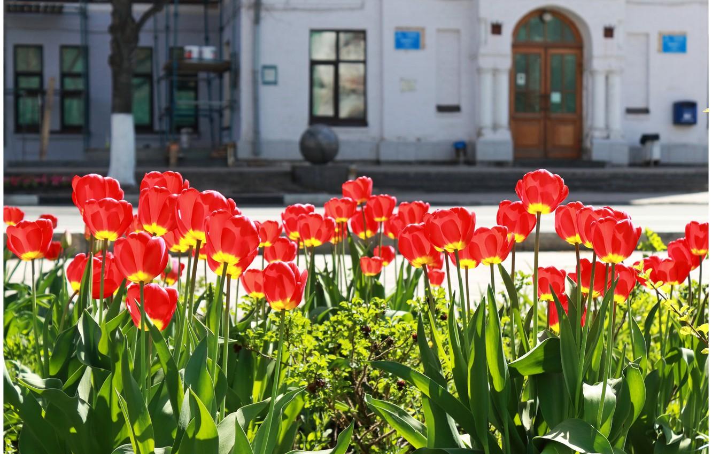 Фото обои зелень, солнце, цветы, фон, окна, шар, дома, красота, размытие, Город, двери, таблички, красиво, тюльпаны, красные, …