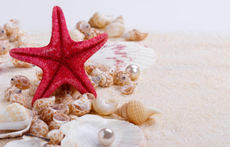 Обои Seashells, sand, Marine, жемчужина, perl, still life, Звезда, starfish, wood, ракушки. Разное foto 12