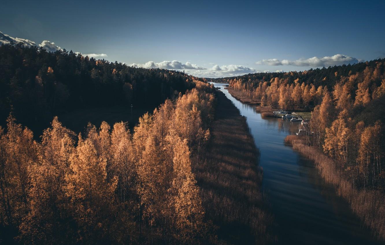 Фото обои осень, лес, река