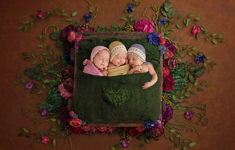 Фото обои цветы, дети, настроение, сон, трио, троица, спящие, младенцы