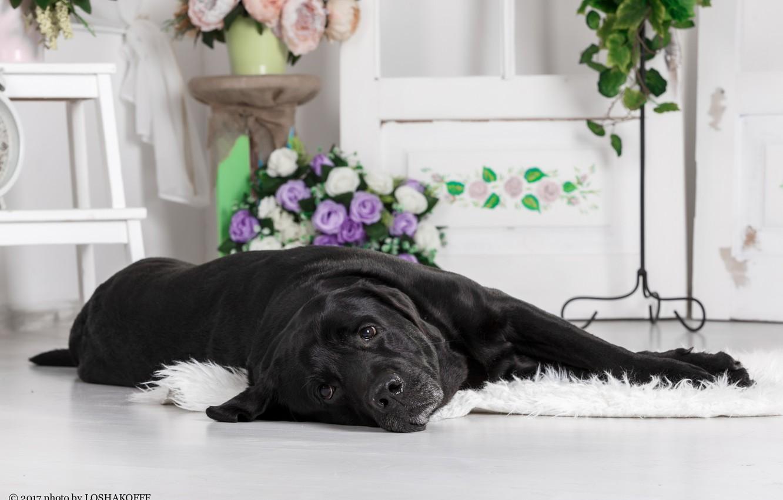 Фото обои цветы, комната, мебель, собака