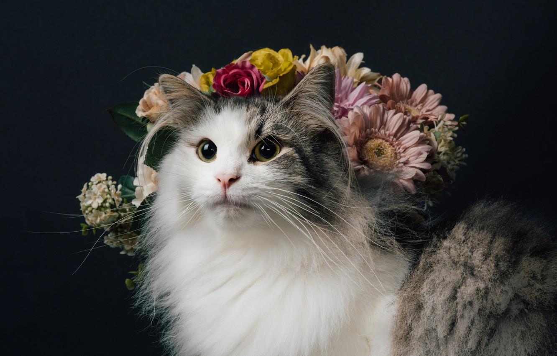 Фото обои кошка, взгляд, цветы, фон, портрет, пушистая, Норвежская лесная кошка