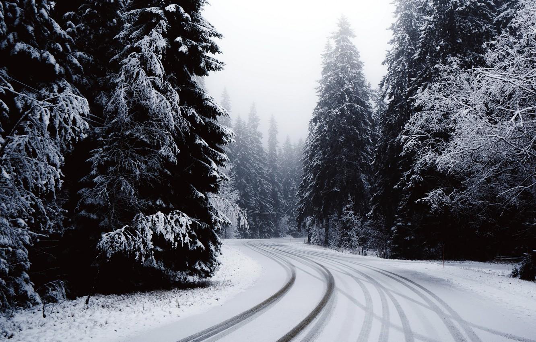 Картинки зимнего леса с дорогой