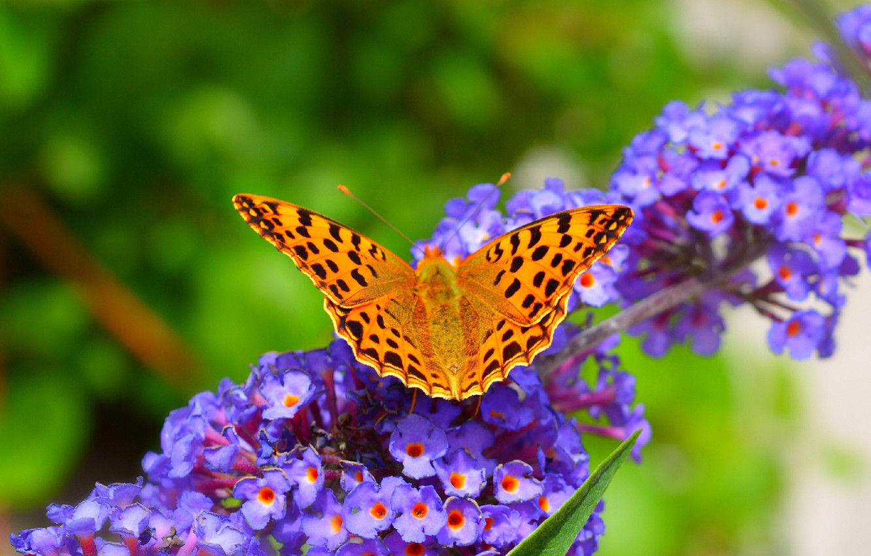 Картинки весна бабочки на рабочий стол