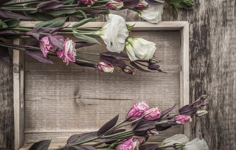 Фото обои цветы, букет, эустома