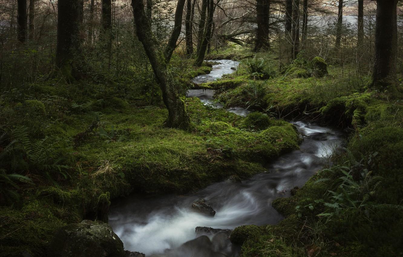 многие них фото ручей в лесу чего производят